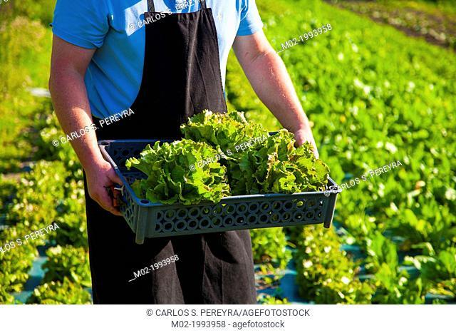 Farm and organic restaurant Le Potager du Nebbio in Orletta, Corsica, France