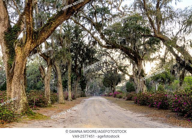 Tree lined path in Bonaventure Cemetery in Savannah, Georgia (HDR)