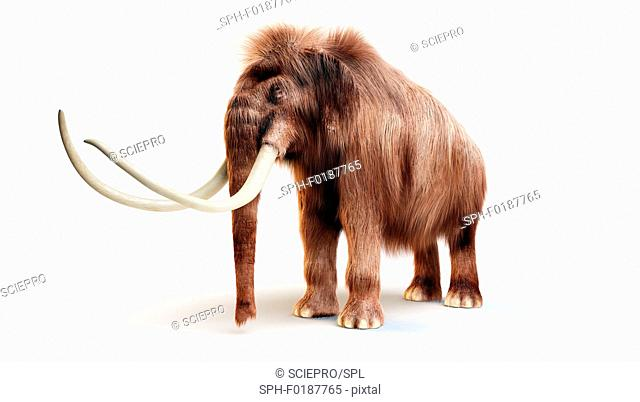 Woolly mammoth against white background, illustration