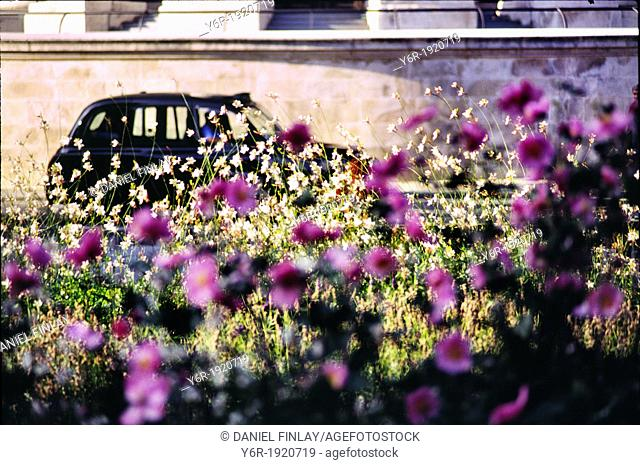 Traditional London black taxi seen through flowers in front of the south entrance to St  Paul's Cathedral in the heart of London, England