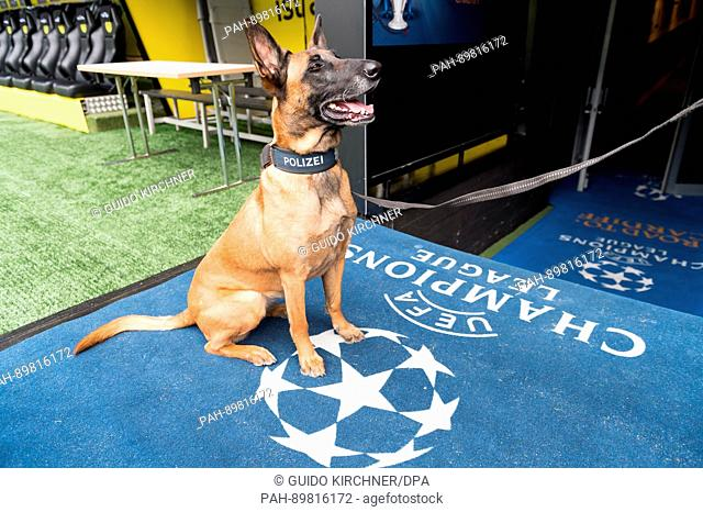dpatop - A sniffer dog for explosive devices of the police searches the Signal Iduna Park in Dortmund, Germany, 12 April 2017