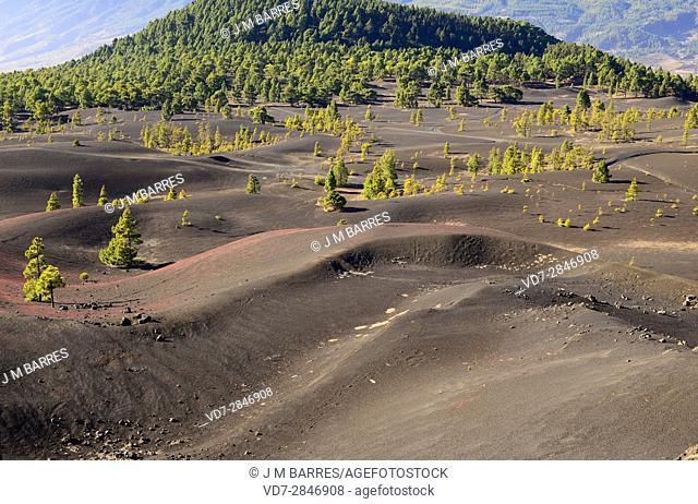 Cumbre Vieja Natural Park. La Palma Island, Santa Cruz de Tenerife province, Canary Islands, Spain