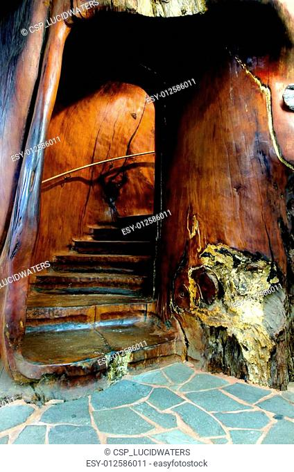 Staircase carved inside a kauri tree