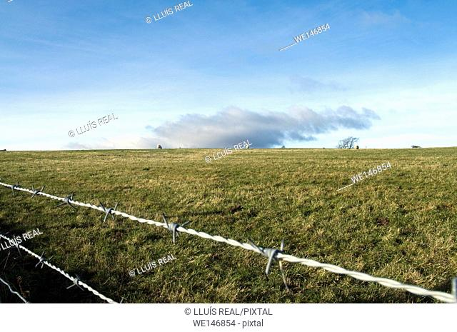 Barbed wire in meadow