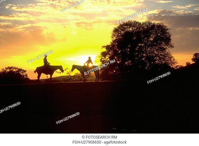 setting, sun, riders, horses, two, tree