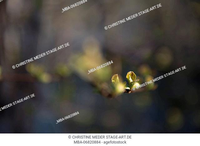 Spring buds, branches, blossom
