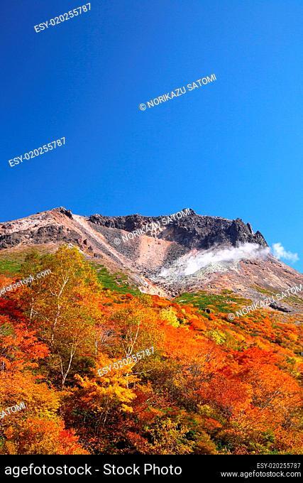 Mountain autumn leaves