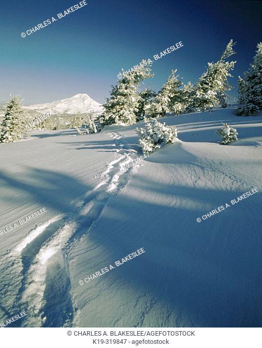 Snowshoe tracks on Tumalo Mountain. South Sister. Cascade Mtn. Range. Deschutes National Forest. Oregon. USA