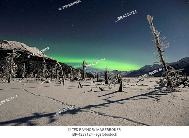 Aurora borealis, moonlight and coyote tracks at Twenty Mile River, Portage, Alaska, USA