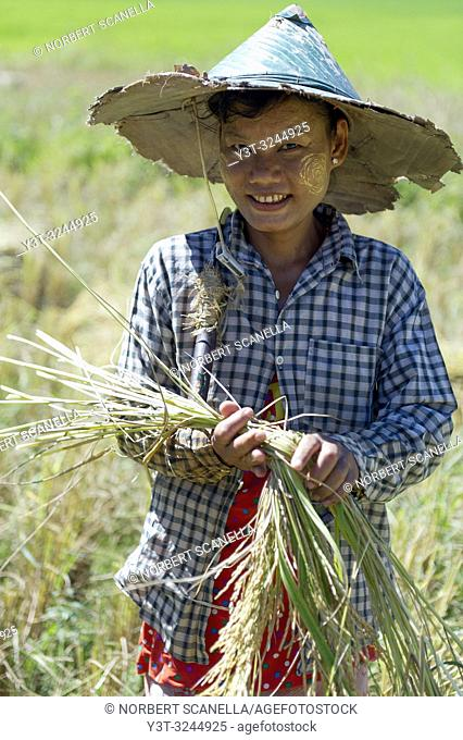 Myanmar (formerly Burma). Kayin State (Karen State). Hpa An. Portrait of a young Peasant girl working in the rice fields