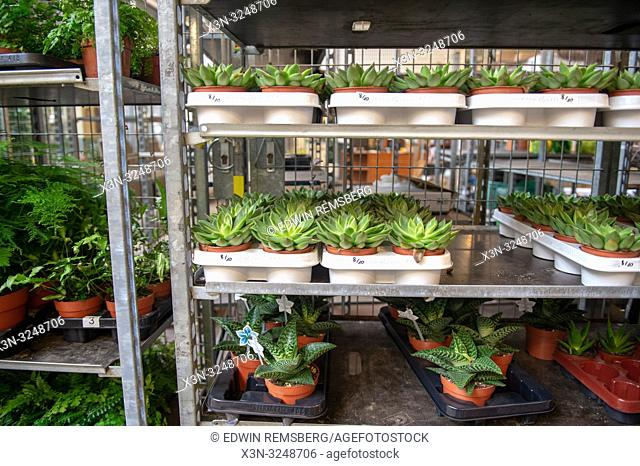 Various potted succulents and ferns sit organized in trays on shelves ready to be sold at the Bronisze Wholesale Market - one of the biggest fruits and...