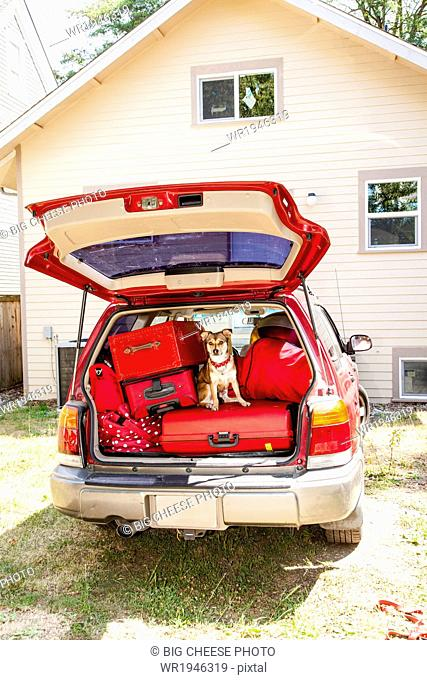 Dog sits atop luggage piled into a packed car