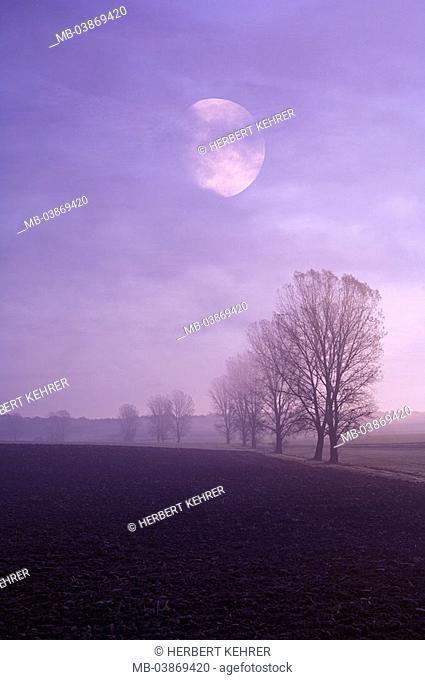 Nature, landscape, morning-fog, fields, black-alders, Alnus glutinosa, autumn-mood, moon, M, Germany, Bavaria, sub-franc, Volkach, field-landscape, trees
