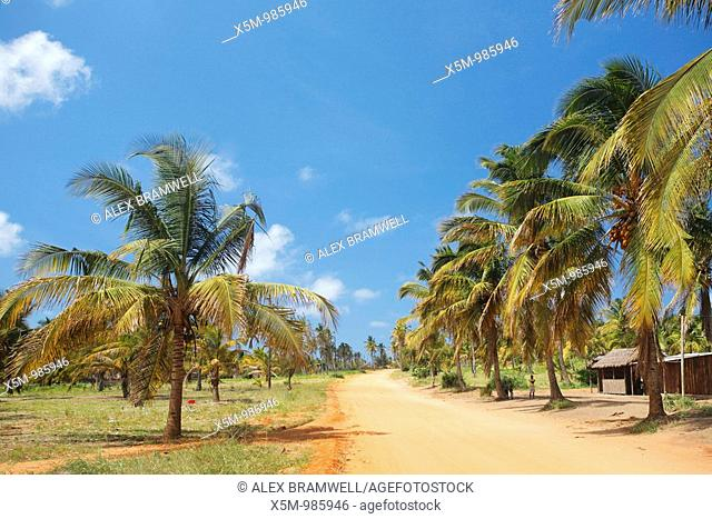 The road to Tofo in Inhambane Province in Southern Mozambique, with coconut palm trees and the characteristic red dirt roads