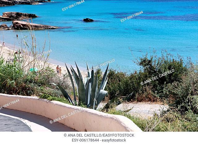Cala Tarida cove Ibiza coast Balearic islands Spain