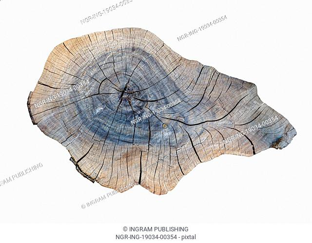 cracking teak tree slice texture on the white