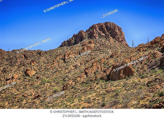 ThenSaguaro West Tucson Mountain area National Park in Arizona USA