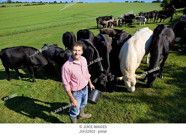 Portrait of smiling farmer feeding cattle in sunny rural field