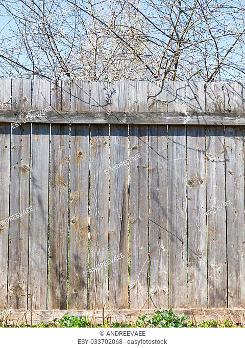 old faded gray wooden fence made of boards with shabby paint and rusty nails sticking out against the bright blue sky and bare trees on a clear day