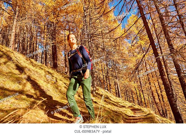 Woman hiking, looking at view, low angle view, Schnalstal, South Tyrol, Italy