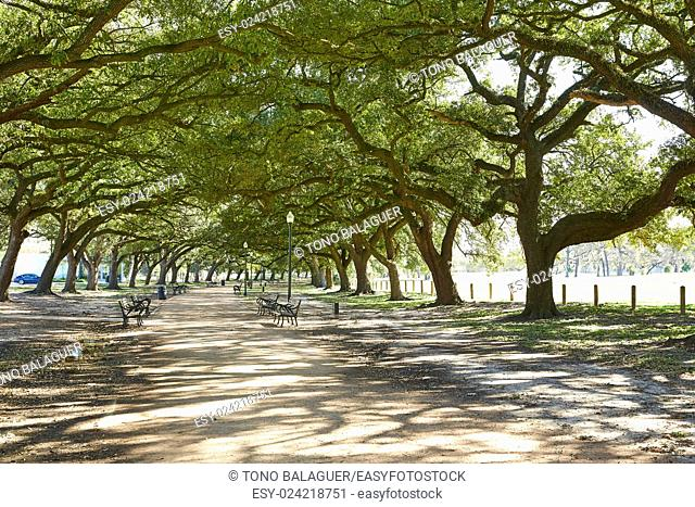 Houston Hermann park Marvin Taylor trail with big oaks at texas