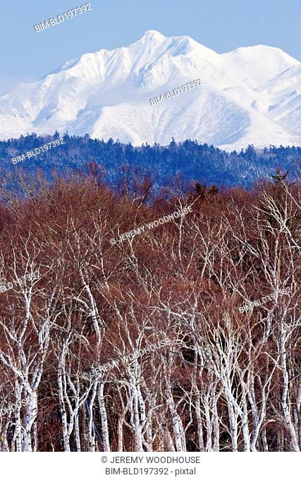 Trees in front of snow covered Mount Shari