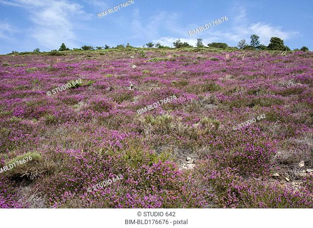 Low angle view of flowers growing on rural hillside