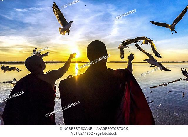 Myanmar (formerly Burma). Mon State. Mawlamyine (Moulmein. Monks feeding seagulls at sunset