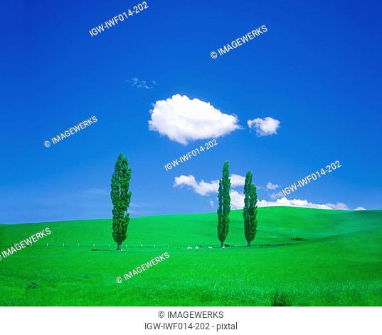 View of green field