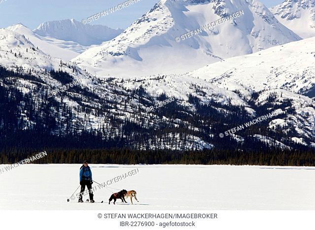 Woman skijoring, sled dogs pulling cross country skier, dog sport, Alaskan Huskies, frozen Lake Lindeman, mountains behind, Coastal Range, Chilkoot Pass, Trail
