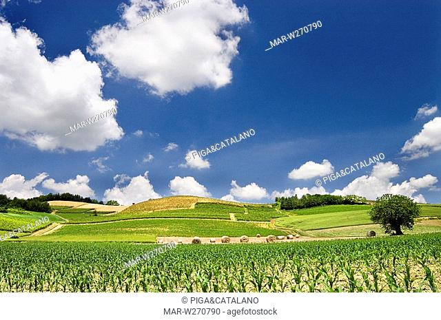 europe, italy, piemonte, monferrato landscape