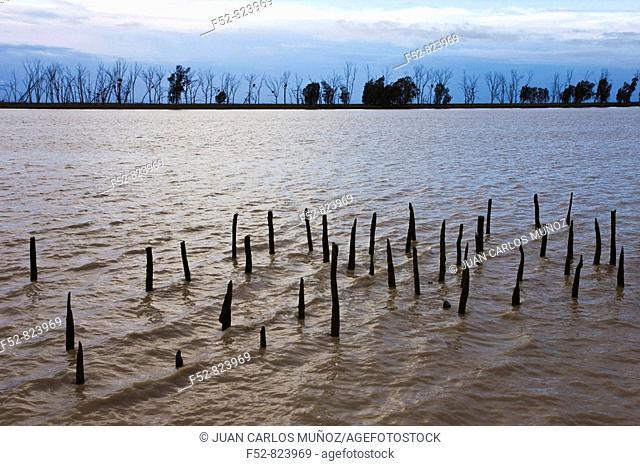 Guadalquivir river, Doñana National Park, Sevilla province, Andalucia, Spain