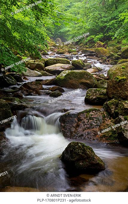 Ilse creek running in the Ilse valley / Ilsetal at the Harz National Park in summer, Saxony-Anhalt, Germany