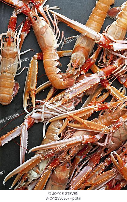 Crayfish in a pond, Stock Photo, Picture And Low Budget Royalty Free