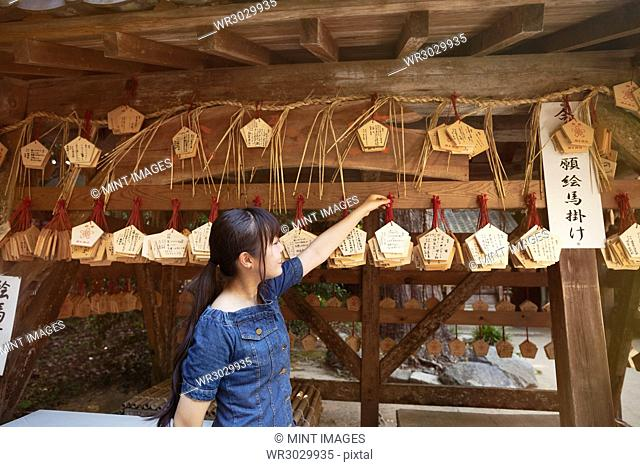 Young woman wearing blue dress looking at wooden fortune telling plaques at Shinto Sakurai Shrine, Fukuoka, Japan