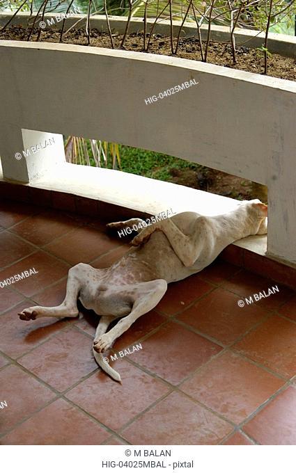 DOG FAST ASLEEP