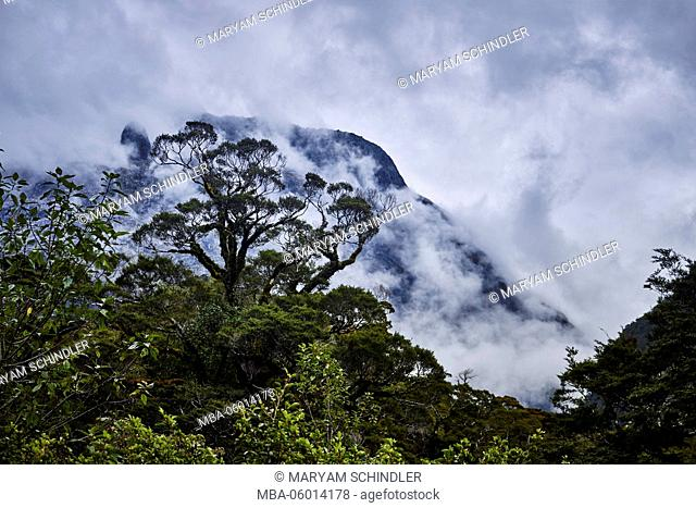 New Zealand, south island, Fiordland, mountains disappear in clouds, trees