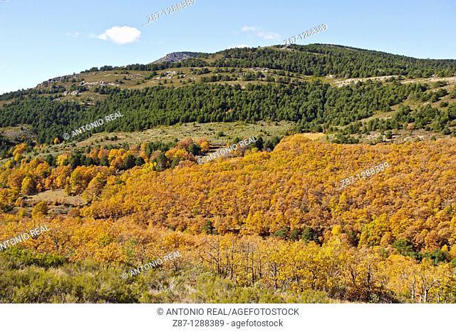 Sierra del Alto Rey, Parque Natural Sierra Norte de Guadalajara, Guadalajara, Spain
