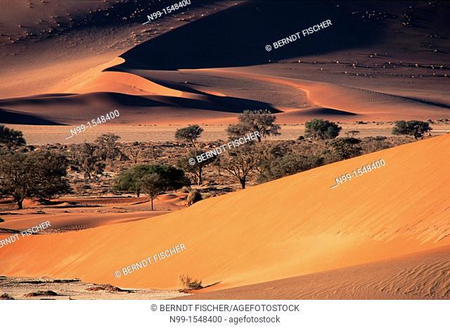Sossus Vlei, Namib Desert, Namib-Naukluft Park, sand dunes, camel thorn, sunset light, Namibia
