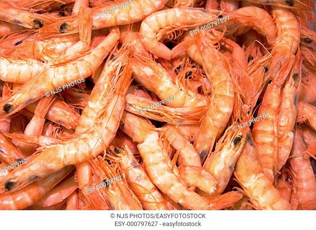 Prawns, in a fish shop of San Miguel Market Madrid, Spain