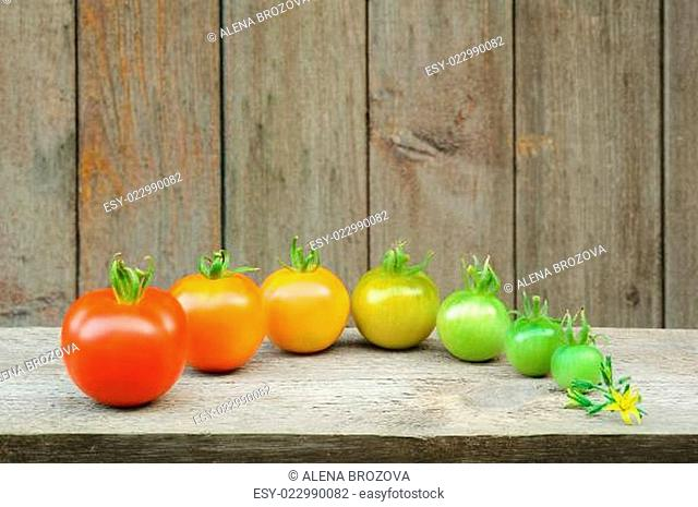 Evolution of red tomato - maturing process of the fruit - stages of development