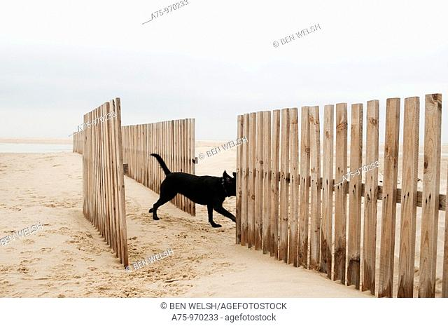 Dog on the beach, crossing fence