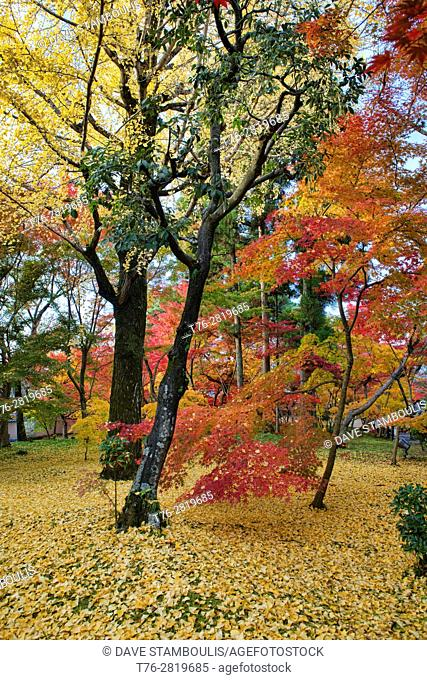 Autumn colors at Eikan-do Temple, Kyoto, Japan