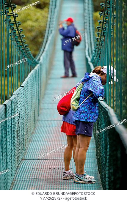 Tour through the forest canopy with suspension bridges in Monteverde. Monteverde, Puntarenas, Costa Rica, Central America, America