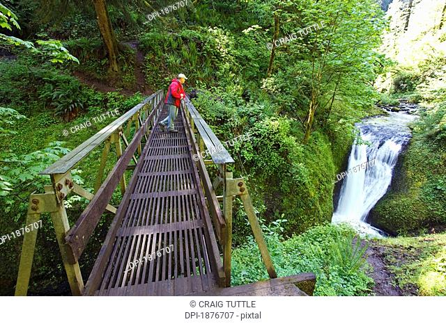 Oregon, United States Of America, A Man Standing On A Bridge Looking At Middle Oneonta Falls In Columbia River Gorge National Scenic Area