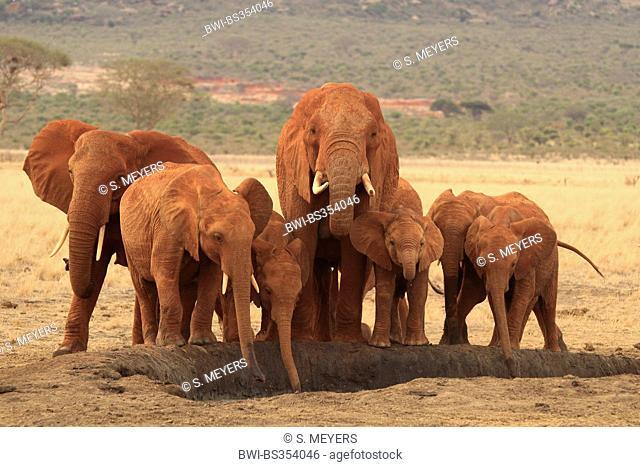 African elephant (Loxodonta africana), herd of elephants at a drinking hole, Kenya, Tsavo East National Park