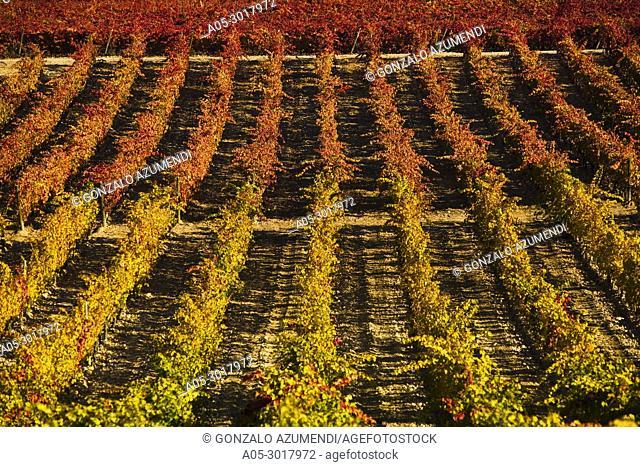 Landscapes and Vineyards in autum next to Briones. La Rioja . Spain