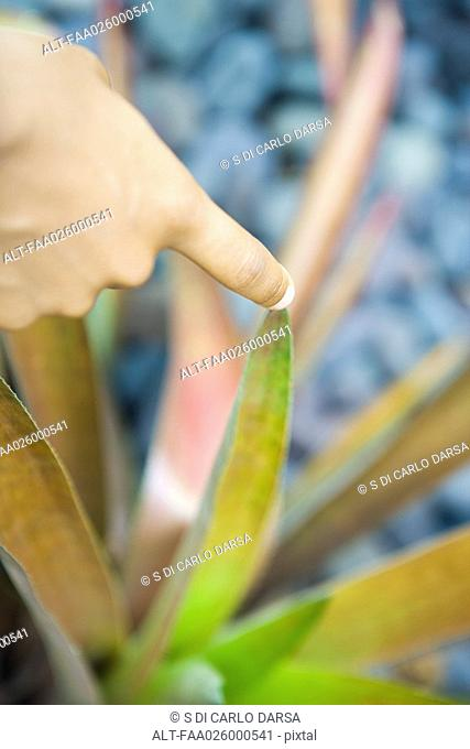 Finger touching tip of leaf, close-up