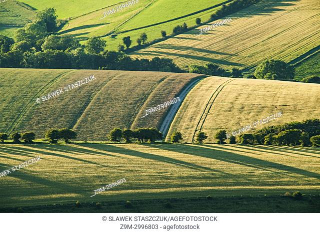Summer in South Downs National Park, East Sussex, England