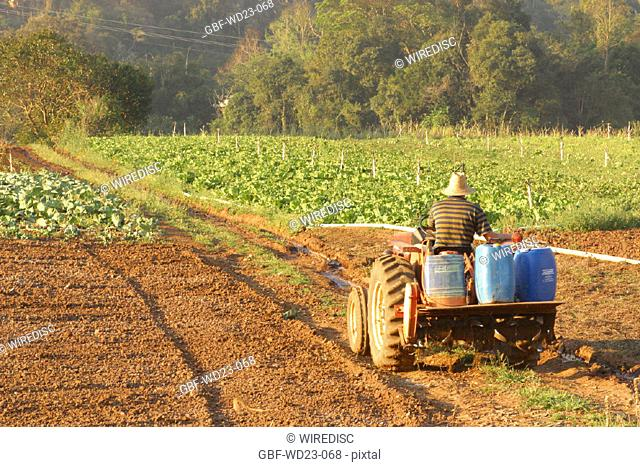 People, man, tractor, plantations, agriculture, Brazil
